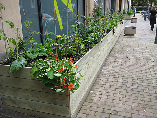 Vegetables in the City, plant installation, (10mx1m), EASTinternational 2009, St Georges Street, Norwich, 2009 © Kate Corder